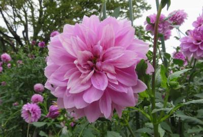 2020秋、名古屋城と名城公園(1/4):10月18日(1):名城公園、花壇、バラ、皇帝ダリア、カンナ、芙蓉、風車、噴水