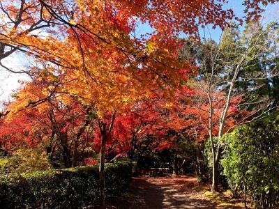 大分 湯布院 金鱗湖周辺の紅葉