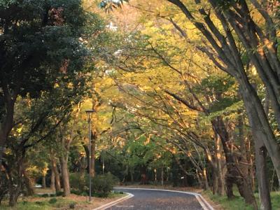四日市の紅葉・・・中央緑地公園