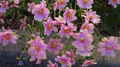 緑ヶ丘公園のさくらの丘へ・・・早咲き桜は無かった その1。