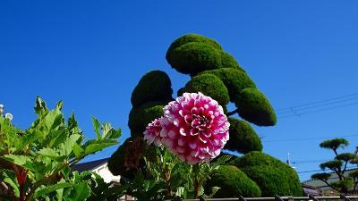 緑ヶ丘公園のさくらの丘へ・・・早咲き桜は無かった その2。