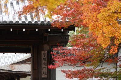 20201112-3 京都 秋の一乗寺散歩其の三、曼殊院門跡