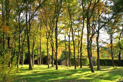大泉緑地を散策