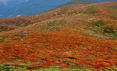 東北山岳紅葉 ②栗駒山「神の絨毯」
