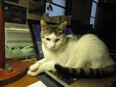 2020ライム百選 Our favorite cat LIME's 100 photos