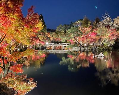 紅葉を求めて...花手水が綺麗な勝林寺からライトアップされた永観堂へ♪