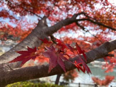 紅葉 in岐阜県