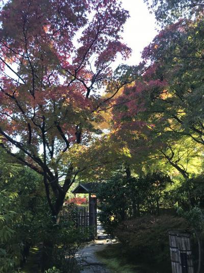 街の中にある日本庭園(白鳥庭園)
