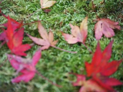 出雲大社から那谷寺まで秋を探しに