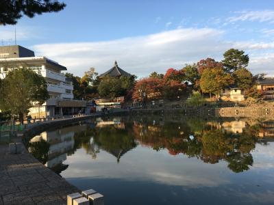 秋の奈良・京都 初めての正倉院展