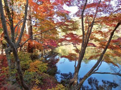 神戸市立森林植物園の「森林もみじ散策」