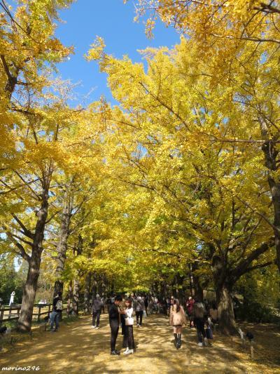 2020 黄葉紅葉まつり@昭和記念公園