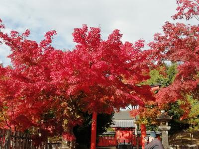 京都 紅葉 真っ盛り