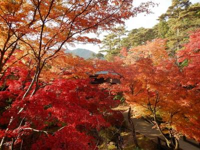 GoTo!高志の宿高島屋特別室宿泊記。弥彦の紅葉&菊まつりもちょっとだけ。