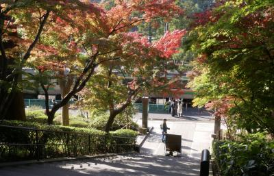 秋の鎌倉へ、紅葉綺麗かな?ぶらっと町歩き編