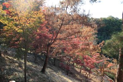 織姫公園(栃木県足利市)へ・・・