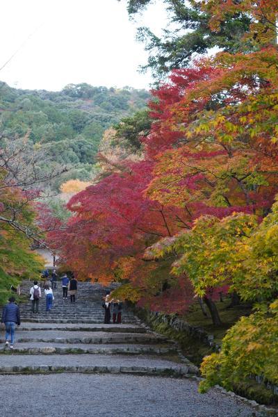 20201115-1 京都 嵯峨野の二尊院まで、紅葉観に行きますか