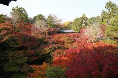 20201116 京都 東福寺の通天橋の紅葉、朝から観に行ってみます