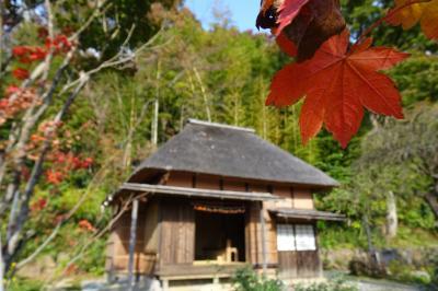 馬場花木園散歩 11月の花(29種)