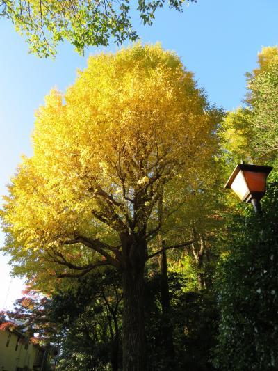 心の安らぎ散歩 2020年11月 大田黒公園に初めて行ってみました♪