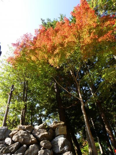 「唐沢山城跡」の紅葉_2020_一部色付き始めているが、ほぼ緑です(栃木県・佐野市)