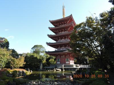 自然・温泉・歴史 玉名の魅力満載秋ウォーク