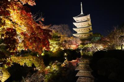 20201117-1 京都 今度はちゃんと東寺の境内ライトアップ。紅葉も見頃ですかね。