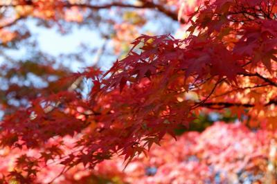 紅葉狩り ~嵐山
