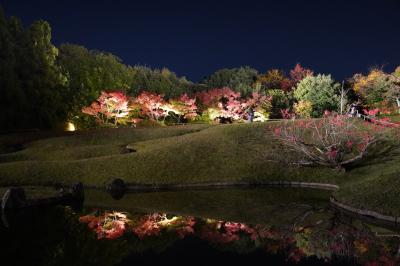 20201117-2 京都 梅小路公園 朱雀の庭の紅葉まつり。紅葉と池とライトアップ。