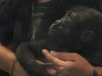 ネブラスカ州 オマハ ヘンリードーリー動物園 ー ゴリラバレー