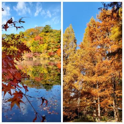 """「神戸市立森林植物園」で""""紅葉""""散策"""