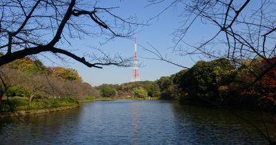 横浜の紅葉 2020 三ッ池公園