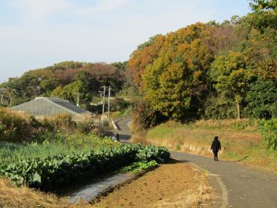 三枚畑の森と三枚畑(横浜市戸塚区舞岡町)