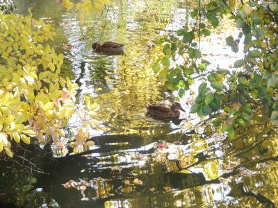 日帰り圏内の甲府にレッサーパンダ小旅行(2)甲府市遊亀公園と動物園でちょっぴり紅葉も愛でる&動物園いろいろ