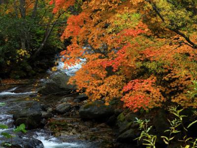 こんな所があったなんて!関東の奥入瀬「照葉峡」の紅葉がすごい!!
