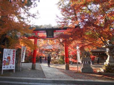 鍬山神社で紅葉狩り