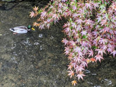 秋の京都旅②~歩いて東山縦断(銀閣寺から建仁寺まで)の巻