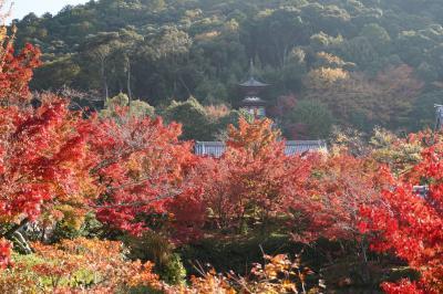 20201118-1 京都 朝から永観堂禅林寺の紅葉を観に出かけます