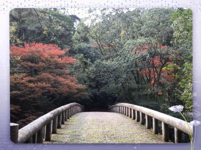吾平山上陵の紅葉を見に