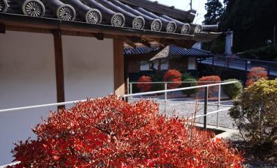 西吉野へ行こう 柿の実の紅葉だ