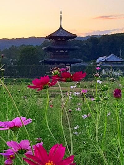 コスモスの咲く法起寺