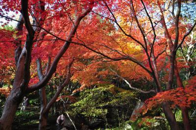 三景園の紅葉・もみじ祭りはライトアップされていました