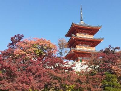 「紅葉の京都散策 」