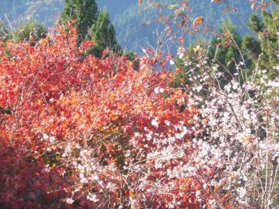 城峰公園の10月桜と紅葉