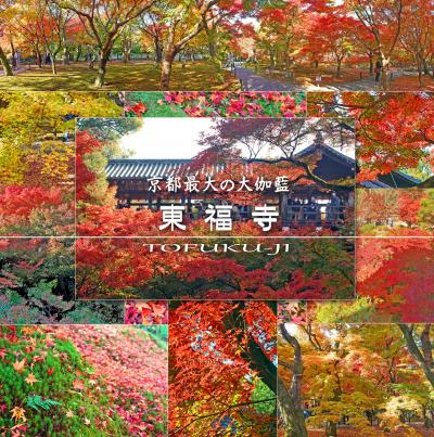 日帰り洛南の紅葉を楽しむ!-東福寺の通天橋、三十三間堂、La famille Morinaga Restaurantでランチ、伏見稲荷大社-