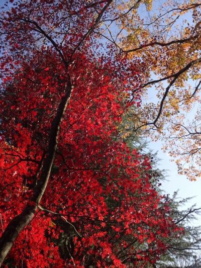 紅萌ゆる丘の上ーーー(紅葉の河口湖畔宿泊記)