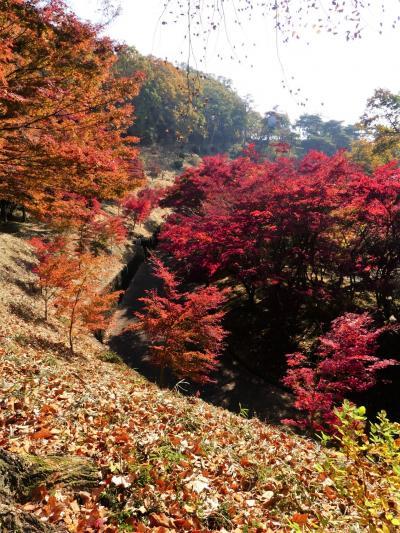 「織姫公園のもみじ谷」の紅葉_2020_色付きが進み、見頃が始まっています(栃木県・足利市)