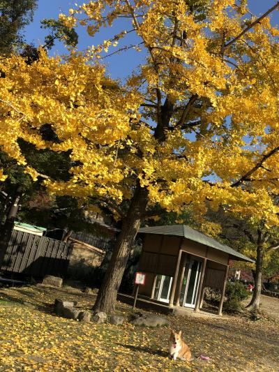 京都彩り旅行!…古都京都で紅葉を求めて…ひとり旅編!