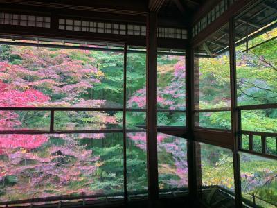 2020年11月 京都に紅葉を見に行く旅 2日目