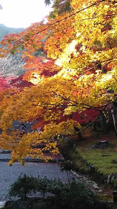嵯峨嵐山、二尊院の紅葉🍁
